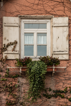 Old house with ivy and white shutters Reklamní fotografie