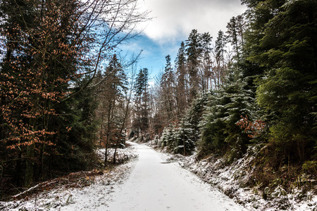 Snowy woodland path in the middle of the winter forest