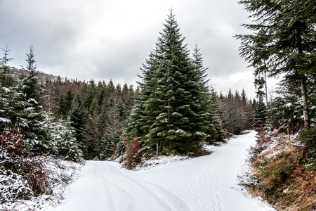 Snowy crossroads in the middle of the winter forest