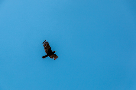 Flying bird in the blue and cloudy sky Stock Photo