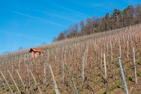 Little hovel in the middle of the wineyard Stock Photo