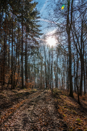 Woodland path in the middle of the forest and the sun
