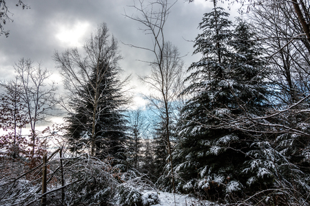 Snowy clearing in the middle of the winter forest
