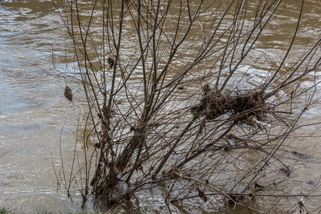 Dangerous flood with a drowning tree and dirty brown water