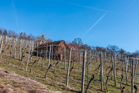 Little hovel in the middle of the wineyard Stok Fotoğraf