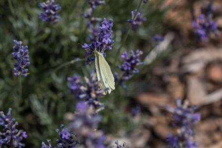 Butterfly on violet flower on the green field of the park Reklamní fotografie