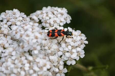 The world view of a tiny beetle on a white flower Stok Fotoğraf