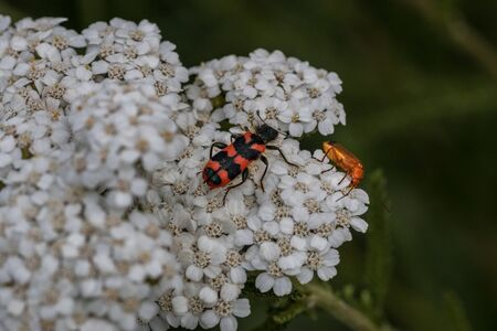 The world view of tiny beetles on a white flower