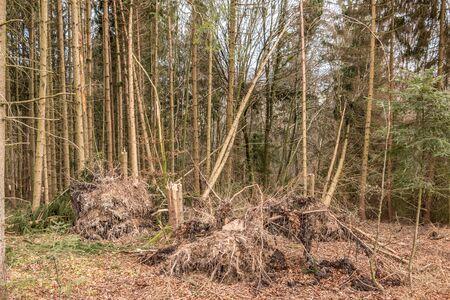 Broken trees after a big storm with big squalls