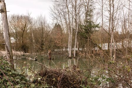 Little swampland with stagnant water and broken trees Standard-Bild