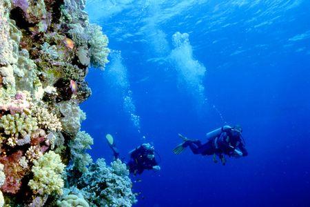 nurkować: Dwa scubadivers dining w Morze Czerwone obok muru rafa