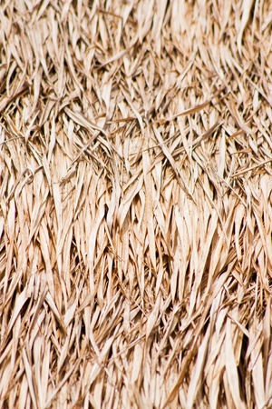 Close up of ground. Texture of straw. Stock Photo - 10585438