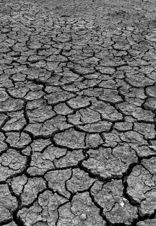 Dry and cracked earth background Stock Photo - 10684019