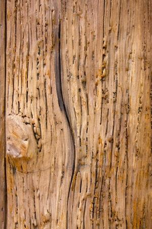 Wood Background Stock Photo - 10841816