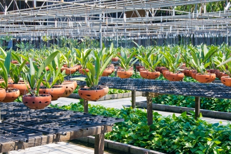 Agriculture orchid fram at thailand