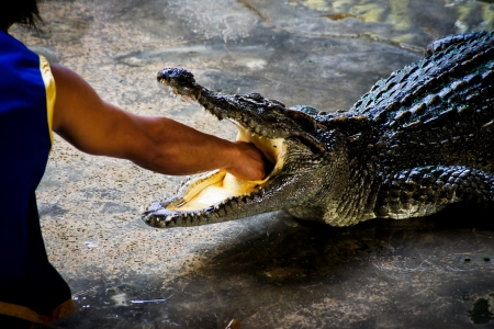 put right hand into a mouth of the crocodile photo