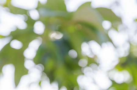 abstract blur of tree background. Stock Photo