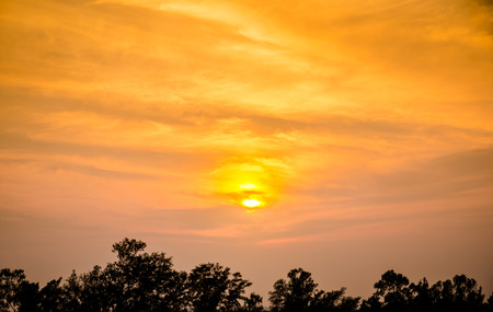 sunset with orange sky and silhouettes tree. Stock Photo