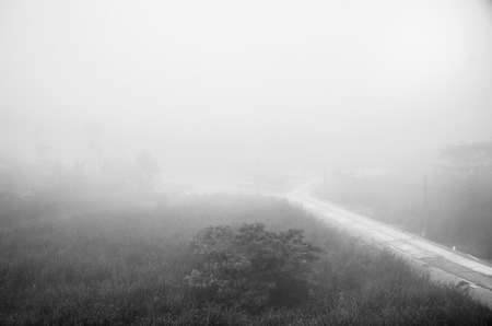 the fog on the road of countryside.