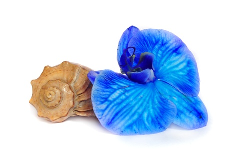 Shell and blue orchid isolated on white background Фото со стока