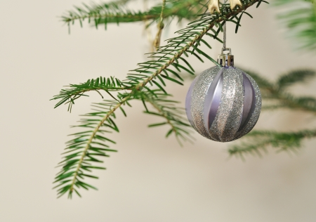New Year background, Christmas tree branch with silver ball photo