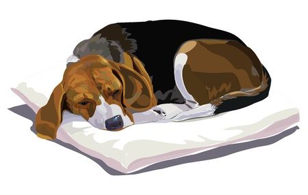 police dog: My belove beagle is sleeping after playing  Illustration