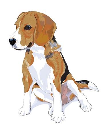 Mi querido beagle es sentarse y ver algo. Ilustración de vector