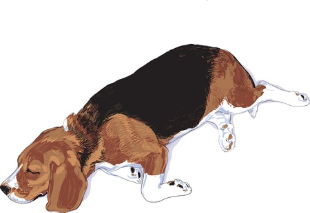 My belove beagle is sleeping in the day time. Stock Vector - 15860921