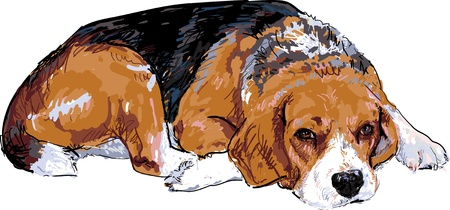 Beagle is resting maybe going to sleep  Ilustração