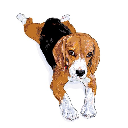 beagle puppy: Despu�s de jugar que tiene que descansar por un tiempo