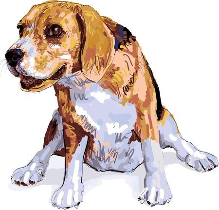 beagle puppy: El perro se sienta feliz despu�s de correr y jugar Vectores