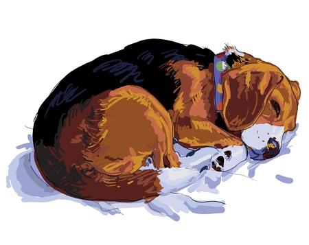 beagle puppy: Beagle est� durmiendo en su coj�n