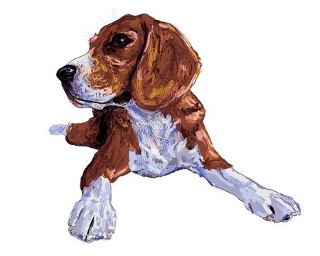 pedigree: Dog beagle  is taking an interest the something