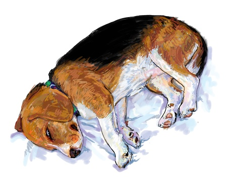 Dog,beagle,  is sleeping ang look like she is dreaming. Stock Vector - 16263295