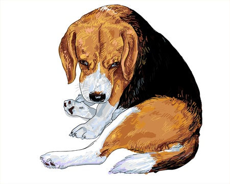 Beagle is sitting and her eye look like she is begging for something. Stock Vector - 16407645