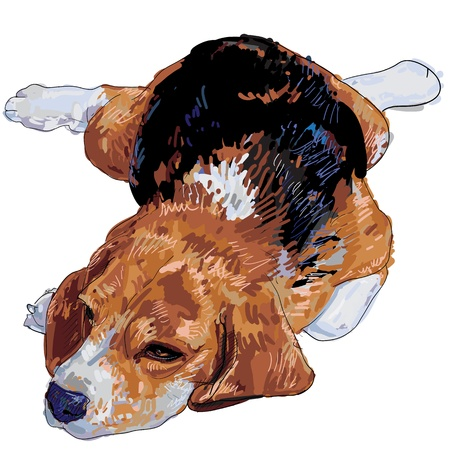 beagle puppy:  Besgle is resting and nearly to sleep  Illustration