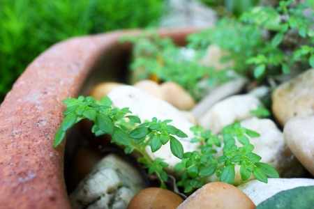reforestation: The texture of the reforestation clay pot