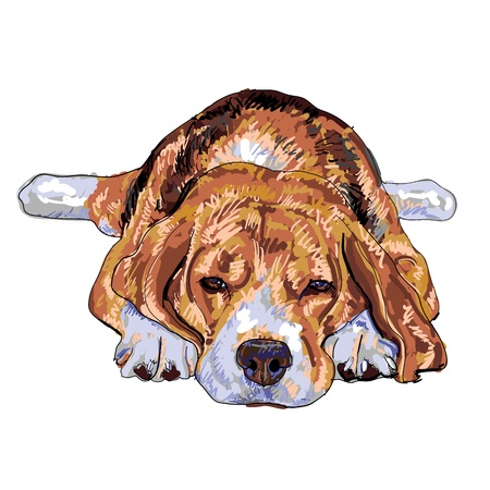 Beagle is resting and nearly to sleep  Stock Vector - 16720436