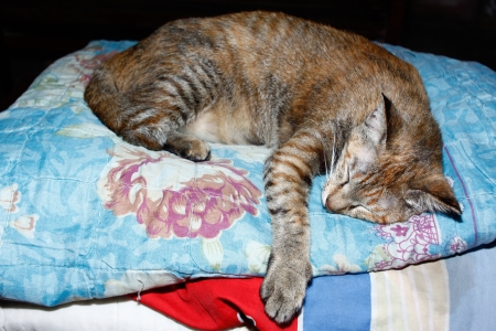 The cat sleep on blanket photo