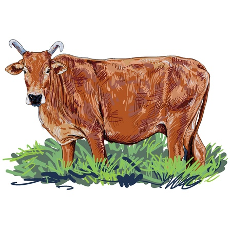 A curious cow in the grassland Vector