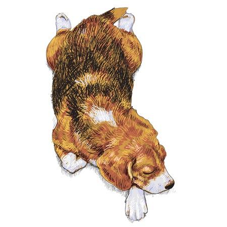 snuffelen: tekening van slapende beagle