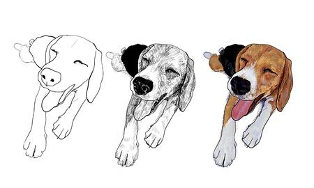 beagle puppy: Beagle est� descansando y su cara sonriente es