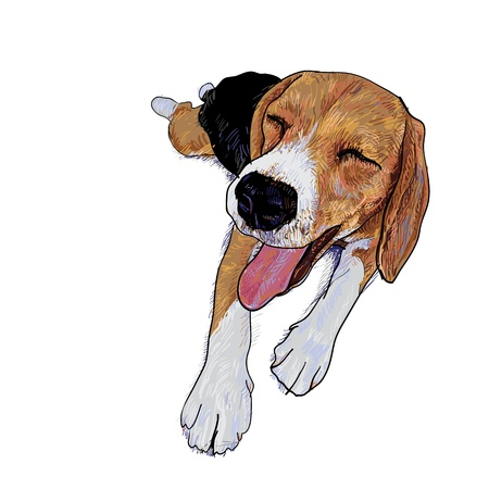 Beagle is resting and her face is smiling Illustration