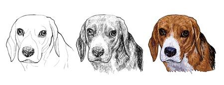 El retrato de Beagle en estilos de pintura de vectores