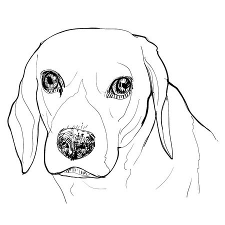 The drawing portrait of Beagle