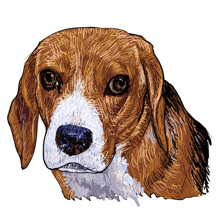short haired: The portrait of Beagle in vector painting styles Illustration