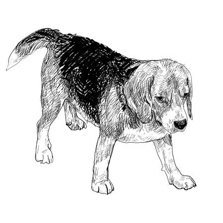 snuffelen: Beagle wacht voor het spelen van Stock Illustratie