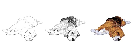 Beagle is laying down and almost fallen asleep Stock Vector - 18286001