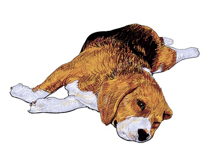 Beagle is laying down and almost fallen asleep  Ilustração