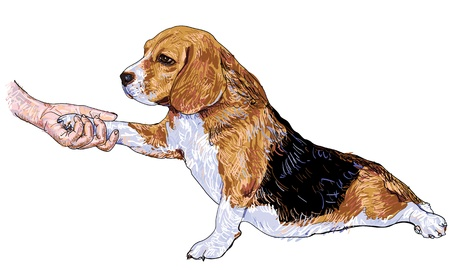 Human hand holding beagle s paw   Illustration